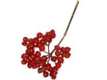 guelder-rose-berries-paul-sterry-npl