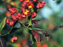 treeid-spindle01