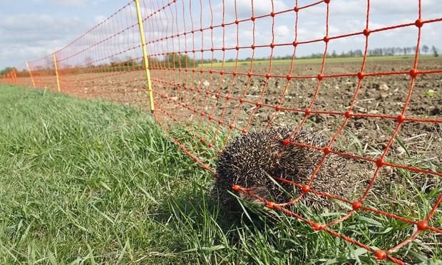 ashridge dead hedgehog