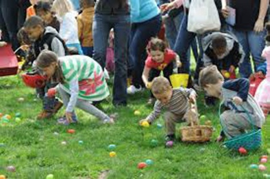 egg collecting